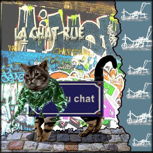 chat rue 1