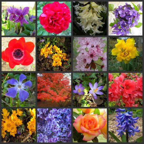 les-fleurs.jpg