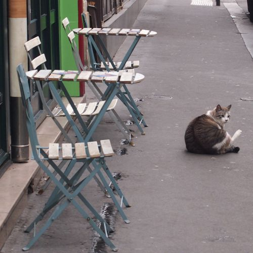 Le-chat-rue-Thouin-10-oct-2012.JPG