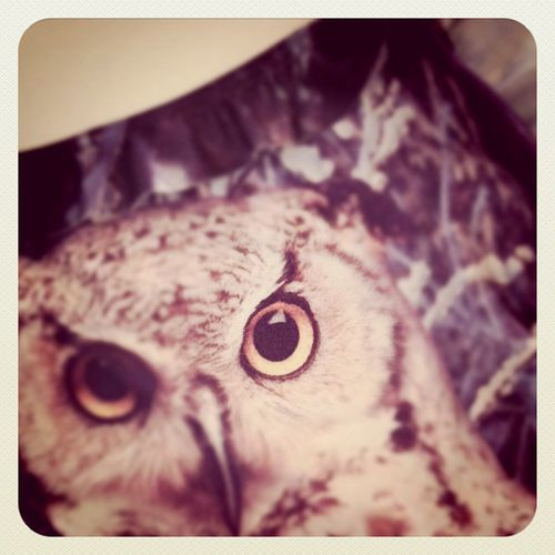 We-Are-Handsome-Owl1.jpg