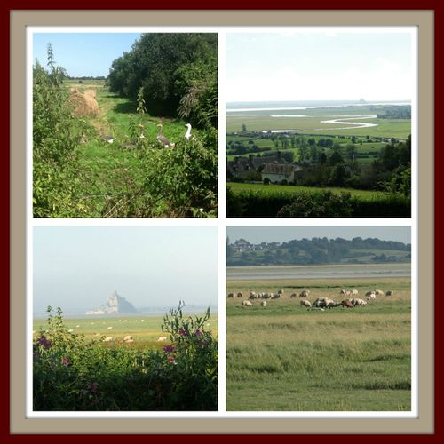 PicMonkey-Collage-campagne.jpg
