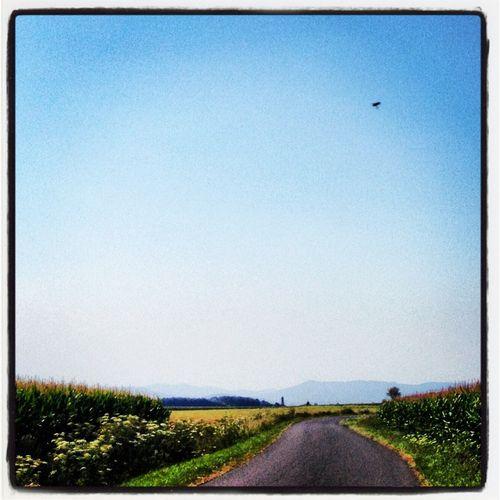 L'Ain à vélo - Les champs de maïs