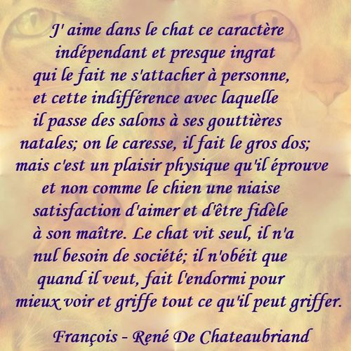 chat-chateaubriand.jpg