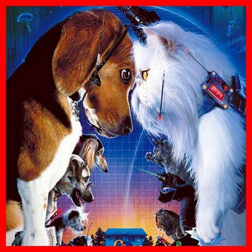 Le combat entre chiens et chats- Film
