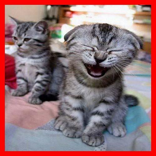 les rires des chats