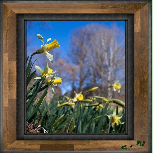 printemps mars