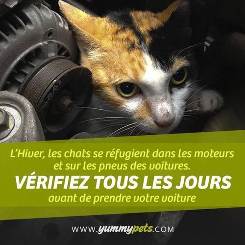 ymp_chat_autre_54662a3b4fe6e.jpg
