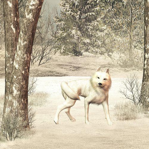 snow wolf de Kandace Wright