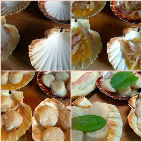 1ere phase coquilles