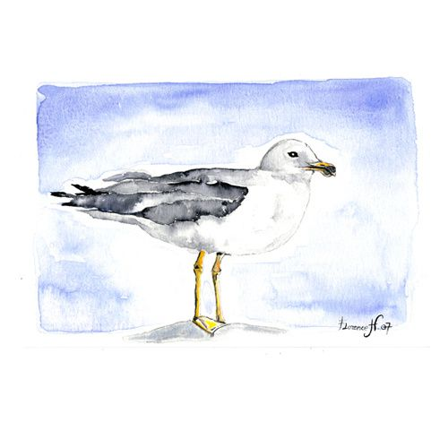 aquarelle dessin oiseau marin mouette mouette au repos etude d 39 oiseaux. Black Bedroom Furniture Sets. Home Design Ideas