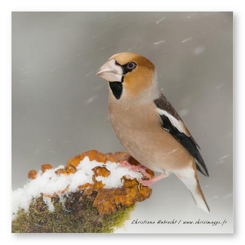 Oiseaux-0527-1024.jpg