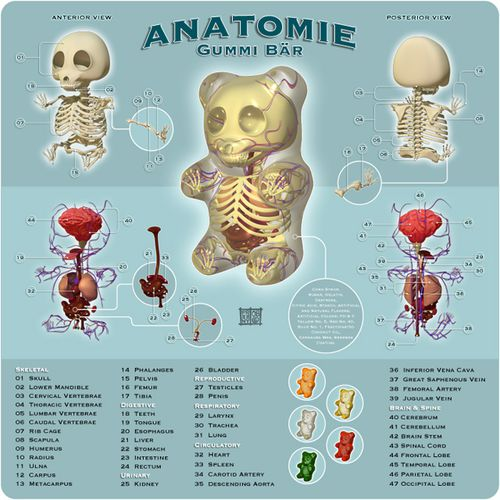gummi-bear-anatomy-toys-are-here.jpeg