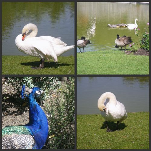 Collage-parc-floral-animaux.jpg