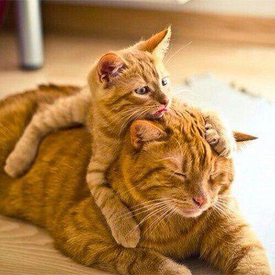 Chatte-chaton-roux.jpg