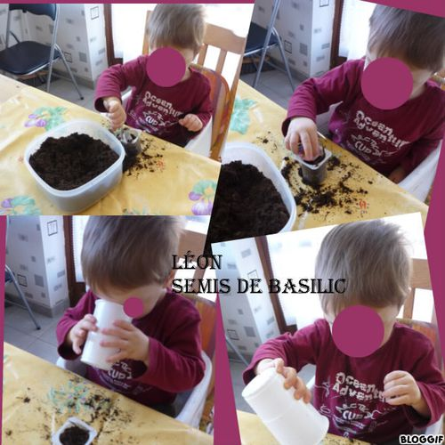 leon-semis-basilic.jpg