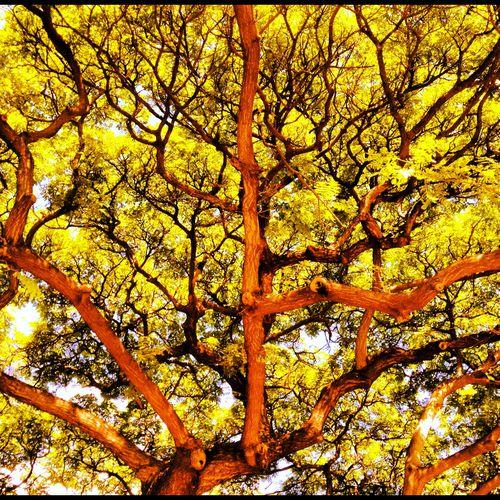 Danser-avec-les-arbres 2198