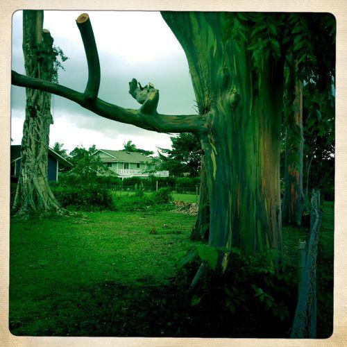 Danser-avec-les-arbres-2465.JPG