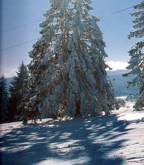 paysage-d-hiver---Les-Fours--Doubs--001.jpg