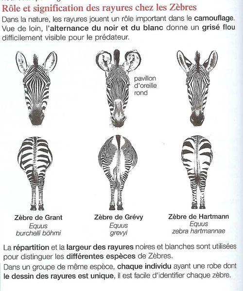 tableau-zebres-a.jpg