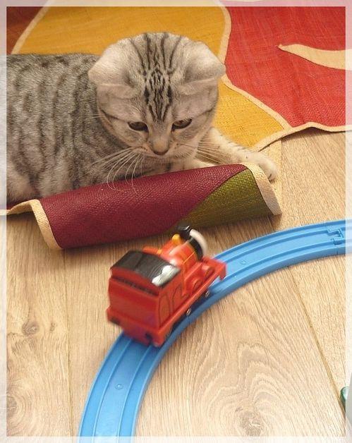 Frizouille joue au train