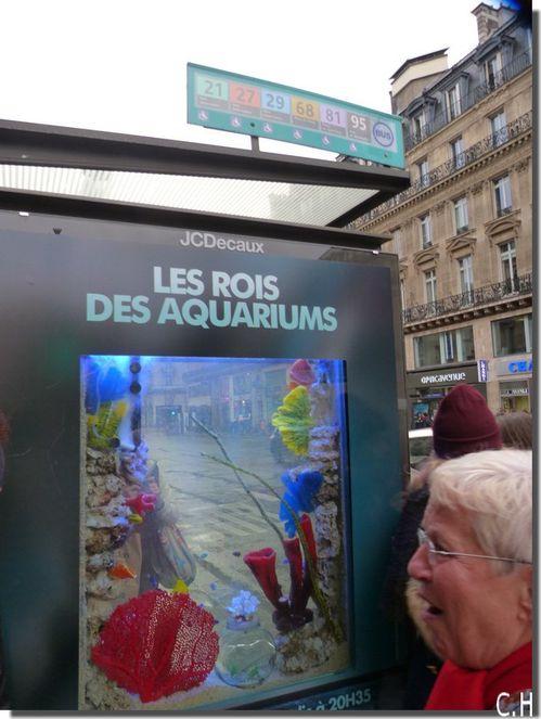 Decaux Aquarium 1