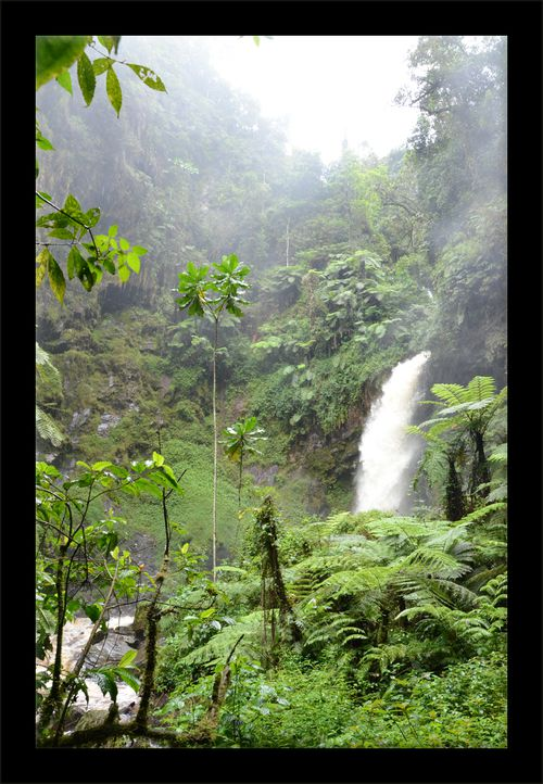Rwanda - nyungwe cascade 26