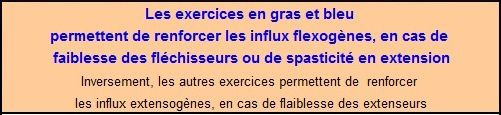 1E influx flexion extension Protocole