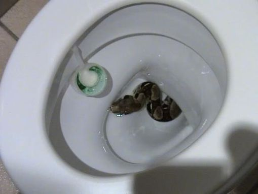 serpent-toilettes.jpg