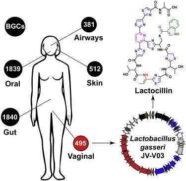 vagin-antibiotique.jpg