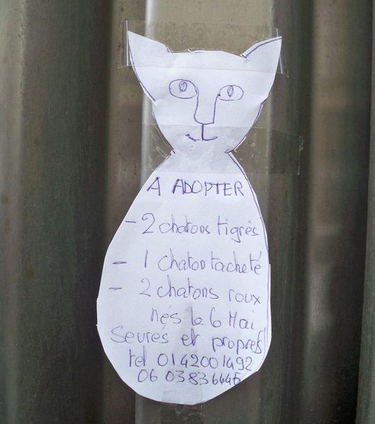 annonce chatons