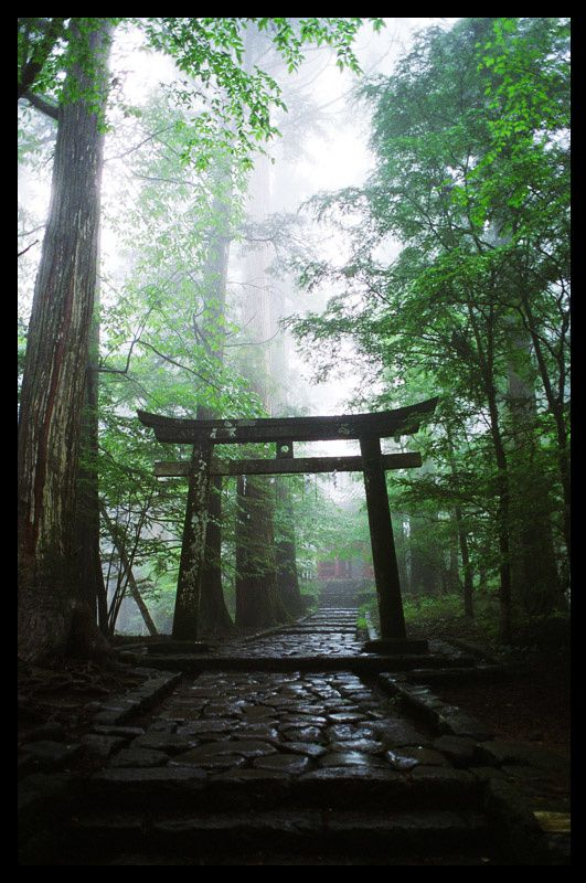 Hello Japan - Torii in Nikko Forest