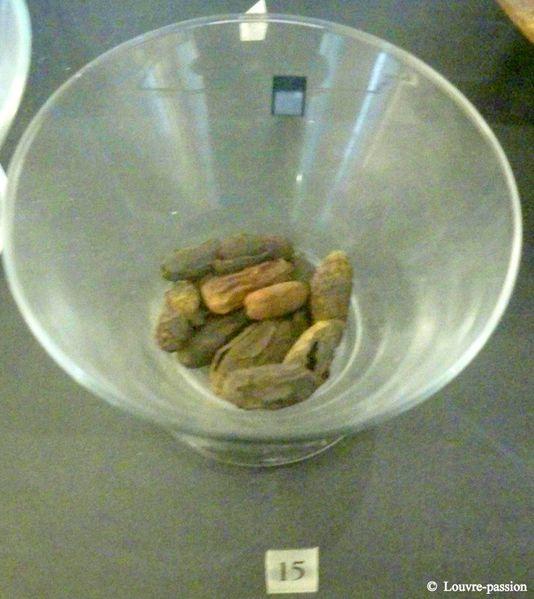 Coupe 15 - Dattes et noyaux de dattes (N 1418)