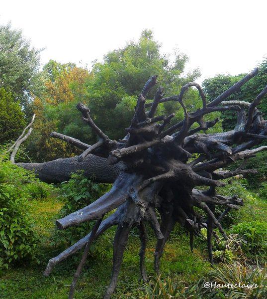 arbre couché 2