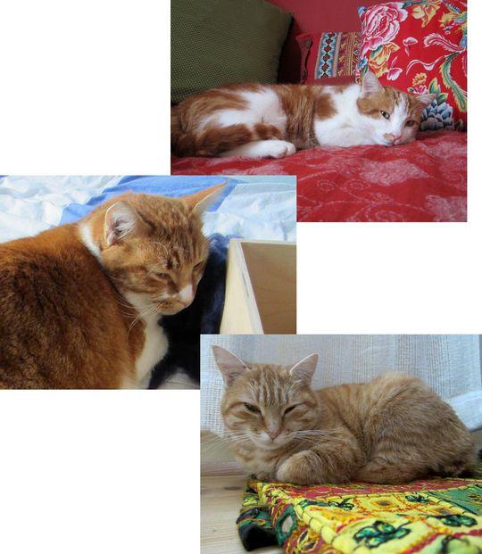 chats-paresseux.jpg