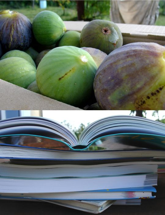 figues-livres.jpg