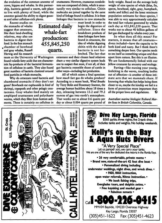 0104 Article baleines B