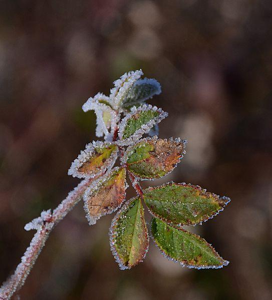 Givre-neige-6-7492.jpg