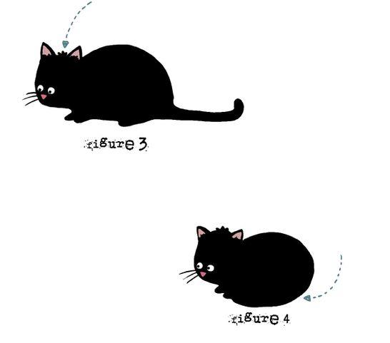 chat-boule-2.jpg