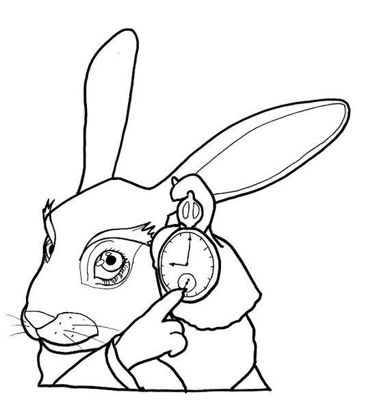 Rabbit(1)