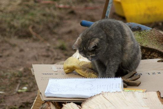 Le-chat-savant.jpg
