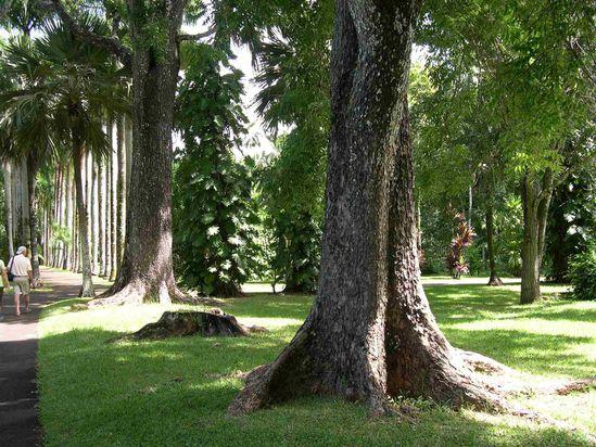 017 Botanic garden Seewoosagur Ramgoolam C