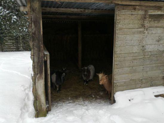 La Vallée, Les Echigneux, 5 février 2012
