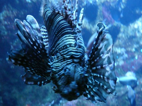 Aquarium St Gilles 10-04-12 039