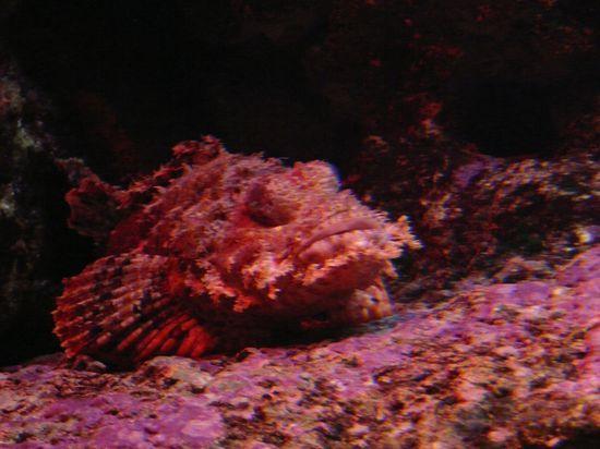Aquarium St Gilles 10-04-12 132