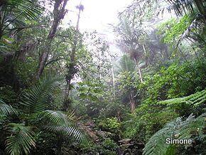 1-290px-Rain Forest of El Yunque, Puerto Rico