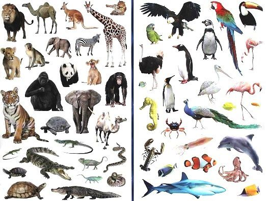 Mon-guide-des-animaux-sauvages-2.JPG