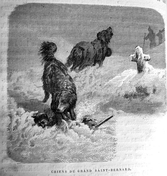 alpes-st-bernards