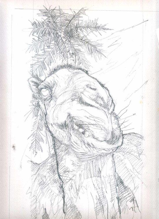 chameau2