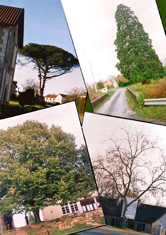 hommage-aux-arbres-de-Limeyrat-2004