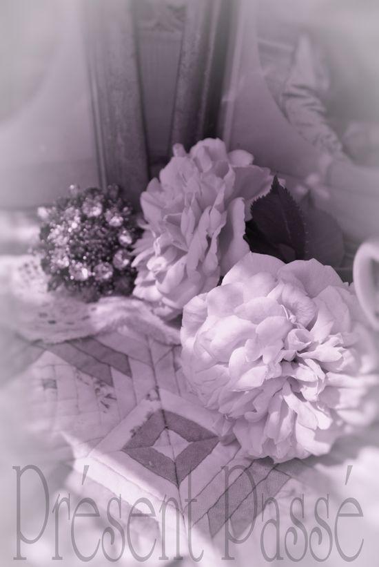 roses 118